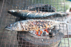 Roasted saba fish on grill. Stock Photo