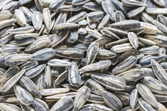 Roasted, salted sunflower seeds full frame stock photos