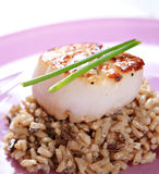 Roasted scallop over brown rice closeup Stock Photos