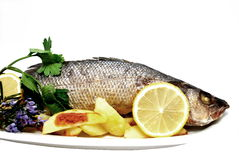 Roasted sea bass Royalty Free Stock Photo