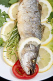 Roasted Sea Bass Stock Image