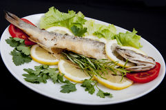 Roasted Sea Bass Stock Images