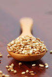Roasted sesame seeds Stock Photography