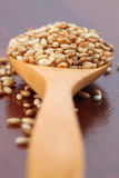 Roasted sesame seeds Royalty Free Stock Photo
