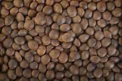 Roasted sesame seeds Stock Image