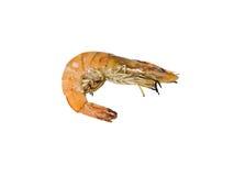 Roasted shrimps isolated on white.  royalty free stock image