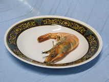 Roasted shrimps on plate. Roasted shrimps on white plate Royalty Free Stock Image