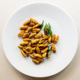 Roasted silk worms on a white plate. Asian snack, fried worms served on a white plate Royalty Free Stock Photo