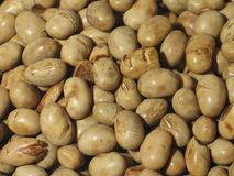 Roasted soya-bean close-up Royalty Free Stock Photo