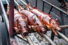 Roasted Suckling Pig - Philippine Specialty Royalty Free Stock Photo