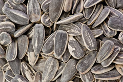 Roasted Sunflower Seeds Stock Photography