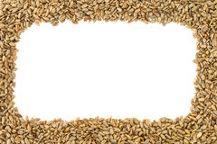 Roasted sunflower seeds frame. Royalty Free Stock Image