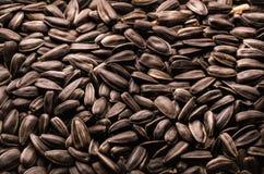 Roasted sunflower seeds Stock Photos