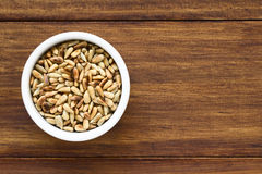 Roasted Sunflower Seeds Stock Images
