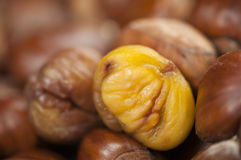 Roasted sweet chestnut cooked and ready to eat. Single peeled roasted chestnut kernel with others waiting stock photos