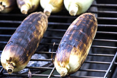 Roasted sweet corns Stock Image