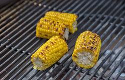 Roasted sweet corns on the grill Royalty Free Stock Images
