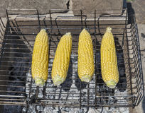 Roasted sweet corns on the grill Royalty Free Stock Photos