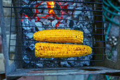 Roasted sweet corns on the grill Stock Images