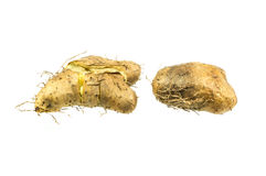 Roasted sweet potato Royalty Free Stock Photos