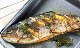 Roasted trout with lemon and dill Stock Photos