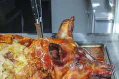 Roasted whole pork Stock Images
