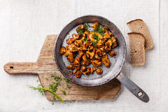 Roasted wild forest mushrooms Stock Photography