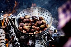 Roaster of fresh chestnuts roasting over hot coals. Roaster of fresh autumn chestnuts in their shells roasting over hot coals of a barbecue fire for a delicious royalty free stock photography