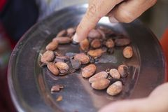 Roasting cocoa beans royalty free stock photo