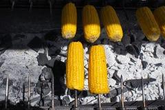Roasting corn. Royalty Free Stock Photo