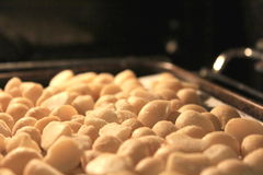 Roasting macadamia Nuts in Oven 2 Royalty Free Stock Photo