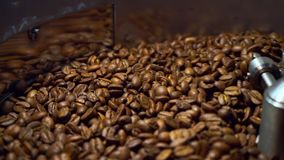 Cooling coffee beans after roasting. Roasting machine, close-up. Roasting machine, freshly roasted coffee beans rotating to cool of stock video
