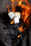 Roasting marshmallows. Roasting marshmallows on a stick over the open fire Stock Photography