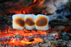 Roasting marshmallows. Marshmallows roasting over a camp fire Stock Photography