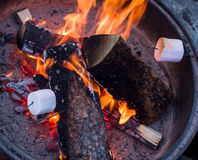 Roasting marshmallows. On open campfire coals Royalty Free Stock Image