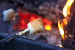Roasting Marshmallows Over Campfire. A roasted marshmallow over a campfire with red glowing coals and Flames Royalty Free Stock Image