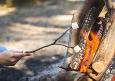Roasting Marshmallows. Person roasting marshmallows on a stick over a campfire while camping Stock Images