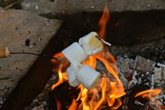 Roasting marshmallows for s`mores stock photography