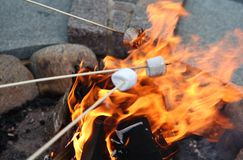 Roasting Marshmallows. Takes in hands roasted on campfire marshmallow candies close up image Stock Image