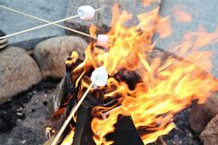 Roasting Marshmallows. Takes in hands roasted on campfire marshmallow candies close up image Stock Photos