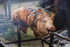 Roasting piglet , grilled pig at street food market in Thailand. Close up Royalty Free Stock Photo
