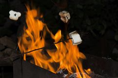 Roasting sweet marshmallows outdoor.Camping time stock images