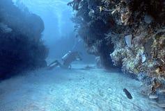 roatan的潜水员 库存图片