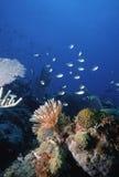 roatan的礁石 免版税库存图片