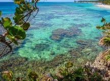 Roatan, Honduras blue ocean, reef, vegetation growing on rocks. Tropical exotic island, vacation, resort, sandy beach in the backg Royalty Free Stock Photos