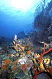 Roatan Reef 1986 Royalty Free Stock Photos