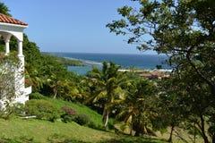 Roatan, vue d'arbre de perroquet photographie stock libre de droits
