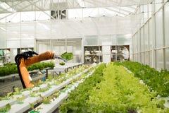 Robótico elegante en concepto futurista de la agricultura, granjeros del robot Imágenes de archivo libres de regalías