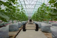 Robótico esperto no conceito futurista da agricultura, automatização dos fazendeiros do robô deve ser programado para trabalhar p Foto de Stock