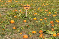 Roba Family Farms in North Abington Township in Pennsylvania Royalty Free Stock Photos